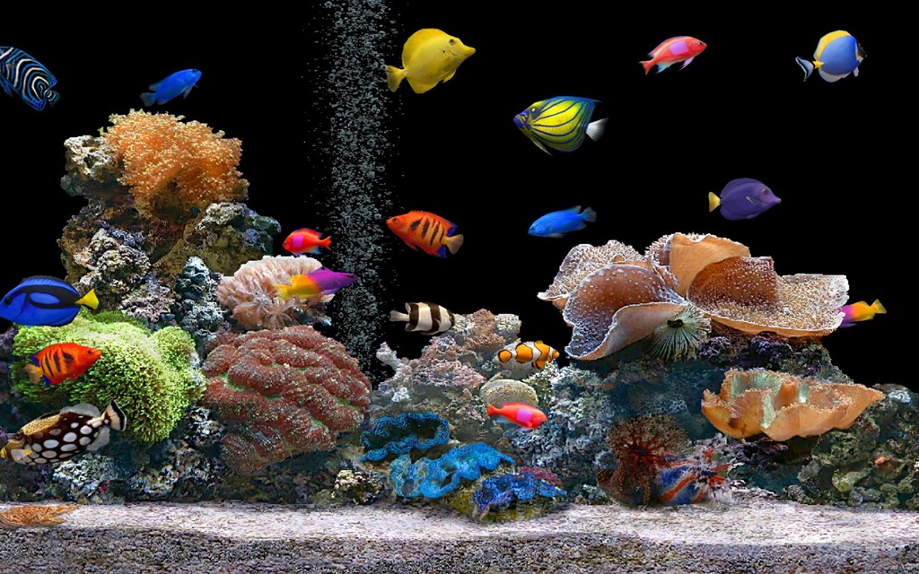 ... learned extensive information about setting up and maintain aquariums