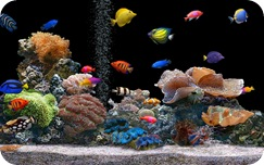 Salt water tank 1