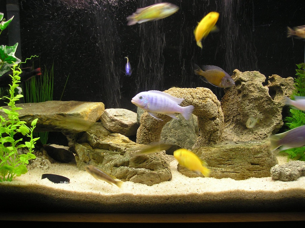 Best freshwater fish house of fishery lovers for Coolest freshwater fish