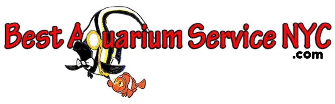 Best Aquarium Service NYC